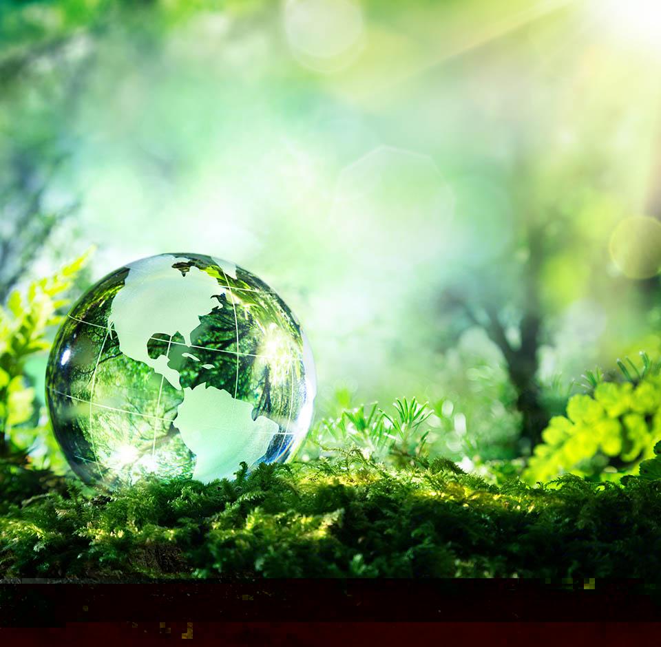 Green Globe Forest