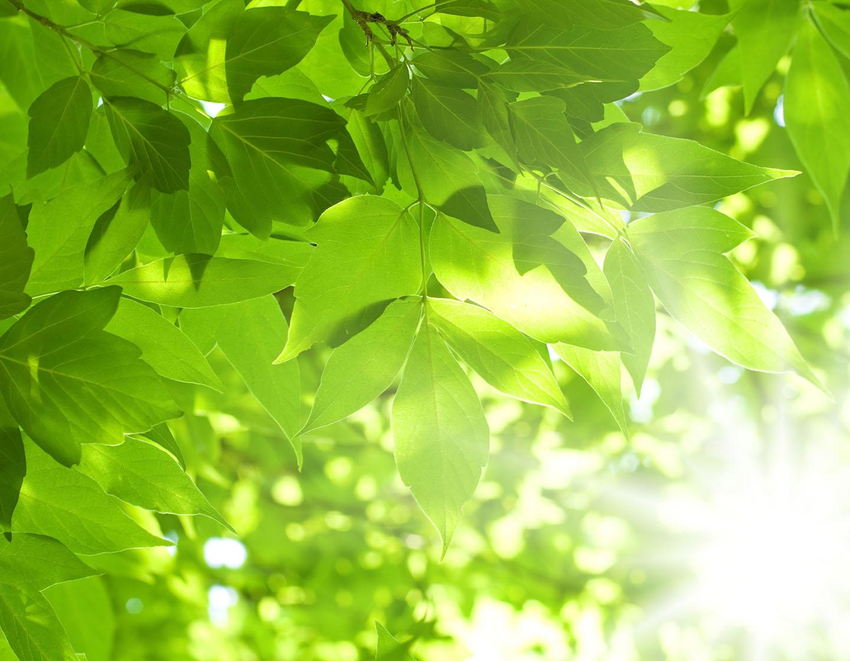 leaves-1440x1120