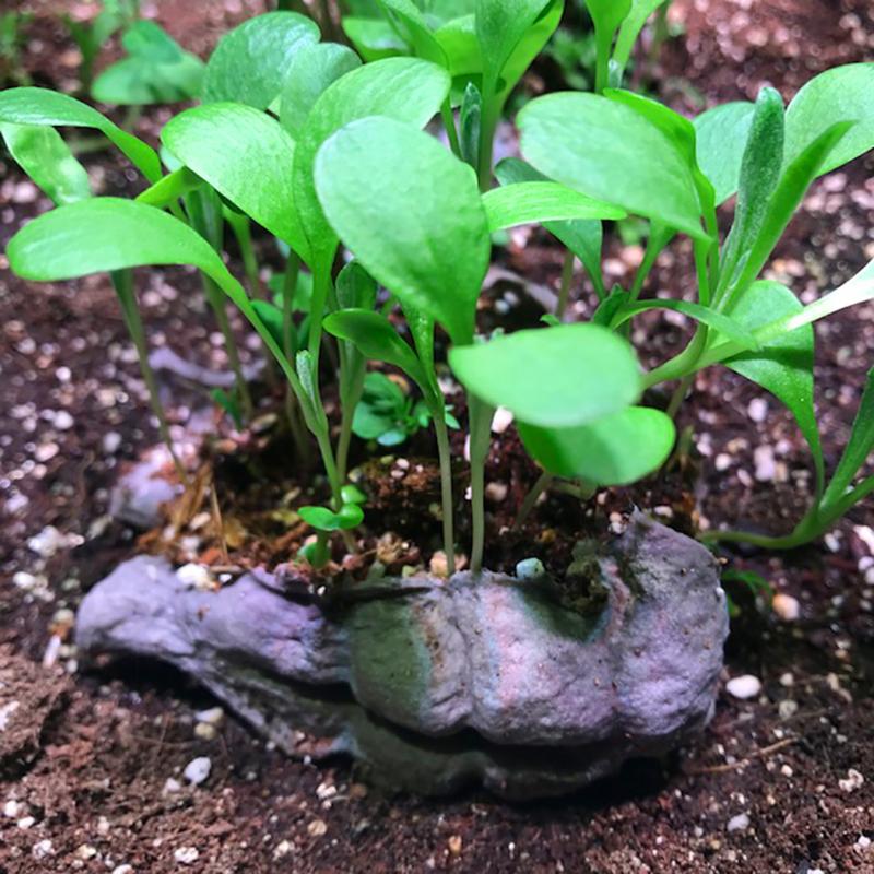 Seedbom-Growing