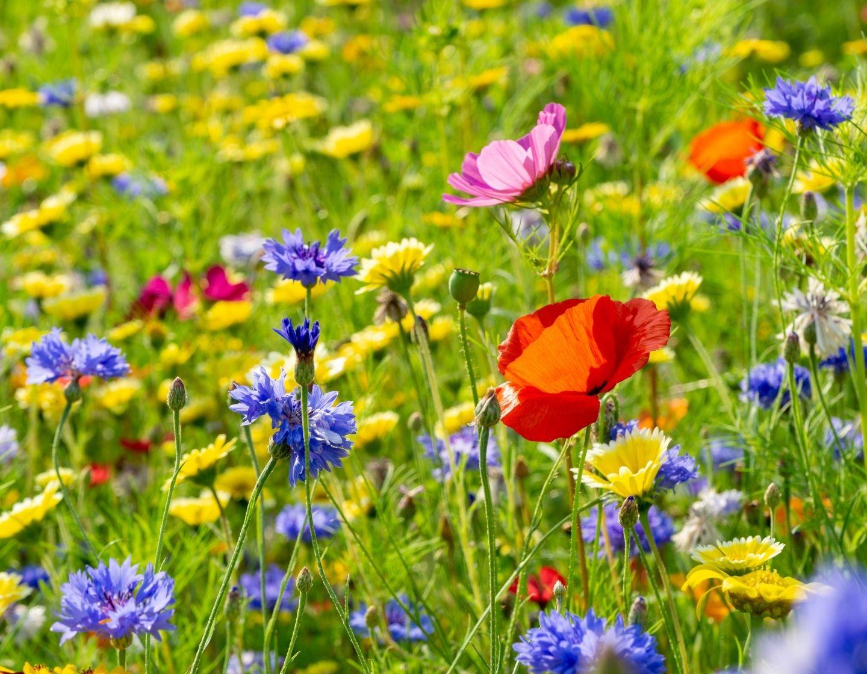Wildflowers 1 FB block