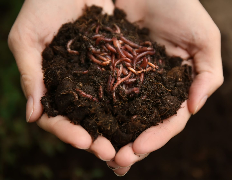 Worms FB block