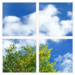 sky-1-Branches-4-sq
