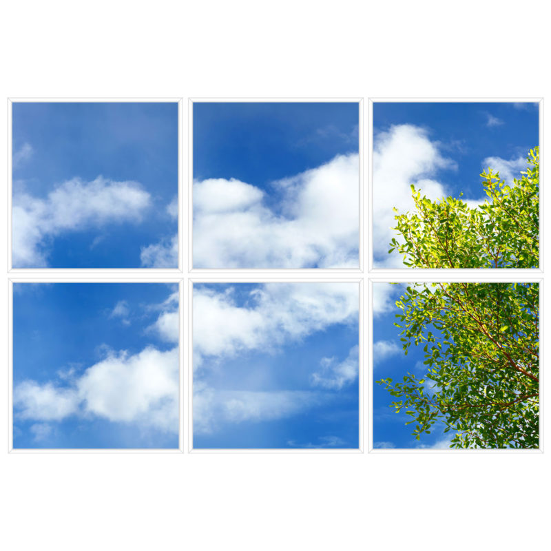 sky-1-Branches-6-sq