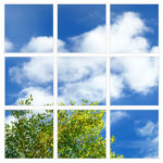 sky-1-Branches-9-sq