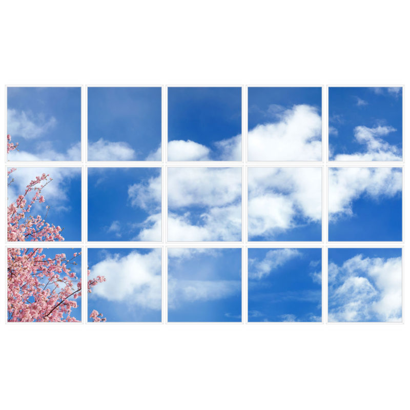 sky-1-Cherry-Blossom-15-sq