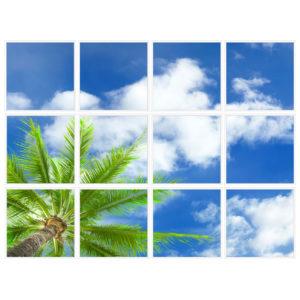 sky-1-Palm-Tree-12-sq