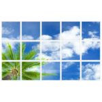 sky-1-Palm-Tree-15-sq