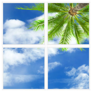 sky-1-Palm-Tree-4-sq