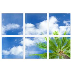 sky-1-Palm-Tree-6-sq