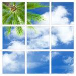 sky-1-Palm-Tree-9-sq