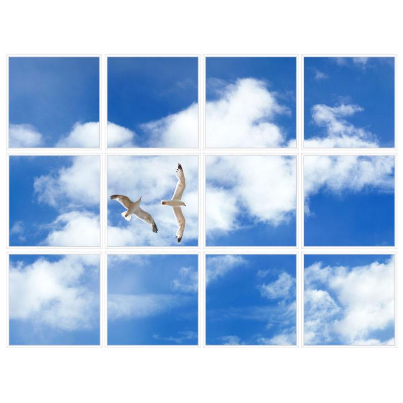 sky-1-Seagulls-12-sq