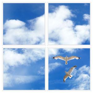 sky-1-Seagulls-4-sq