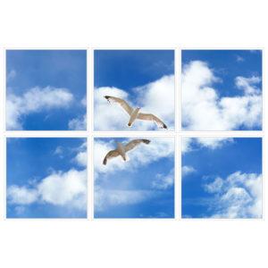 sky-1-Seagulls-6-sq