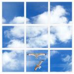 sky-1-Seagulls-9-sq