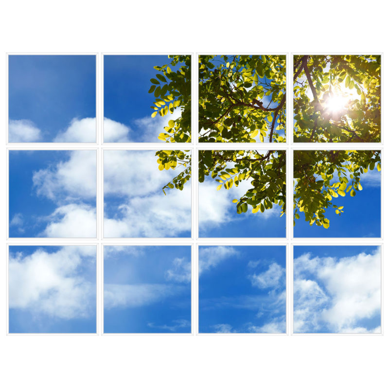 sky-1-Tree-Branch-12-sq