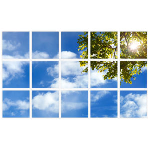 sky-1-Tree-Branch-15-sq