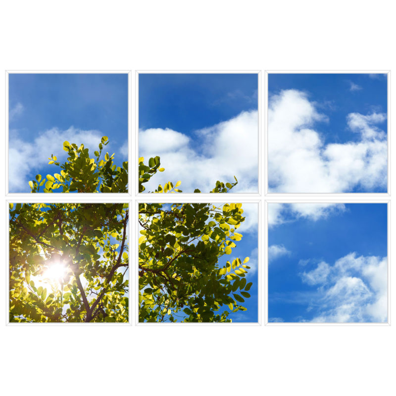 sky-1-Tree-Branch-6-sq