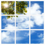 sky-1-Tree-Branch-9-sq