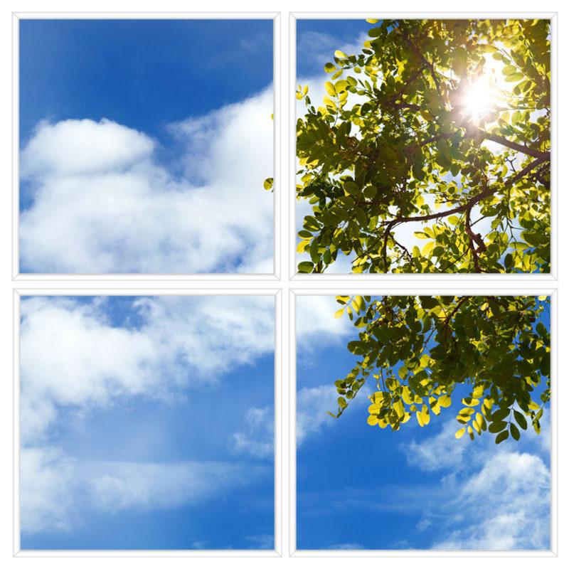 sky-1-Treebranch-4-sq