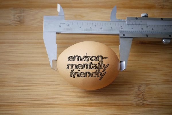 "Image of ""environmental"" egg being measured"